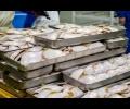 rybe-s-beregovyh-zavodov-prokladyvaut-pyt-na-vneshnie-rynki