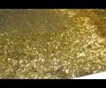 na-kynashire-razvivaut-lososevodstvo